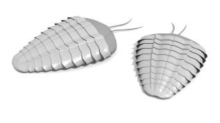 trilobite2